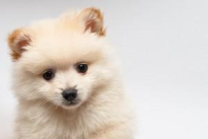 子犬の選び方1