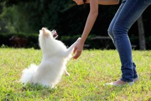 犬のしつけ方