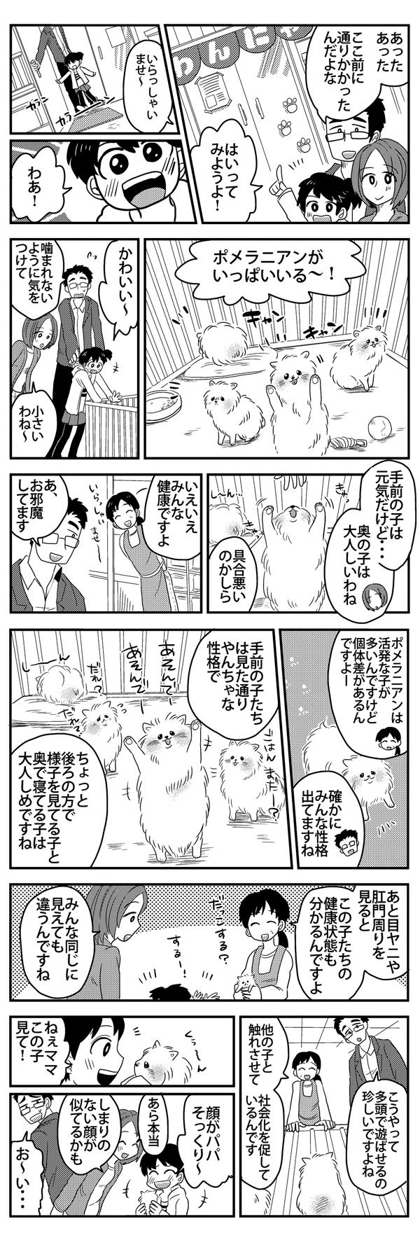 ポメラニアン漫画2