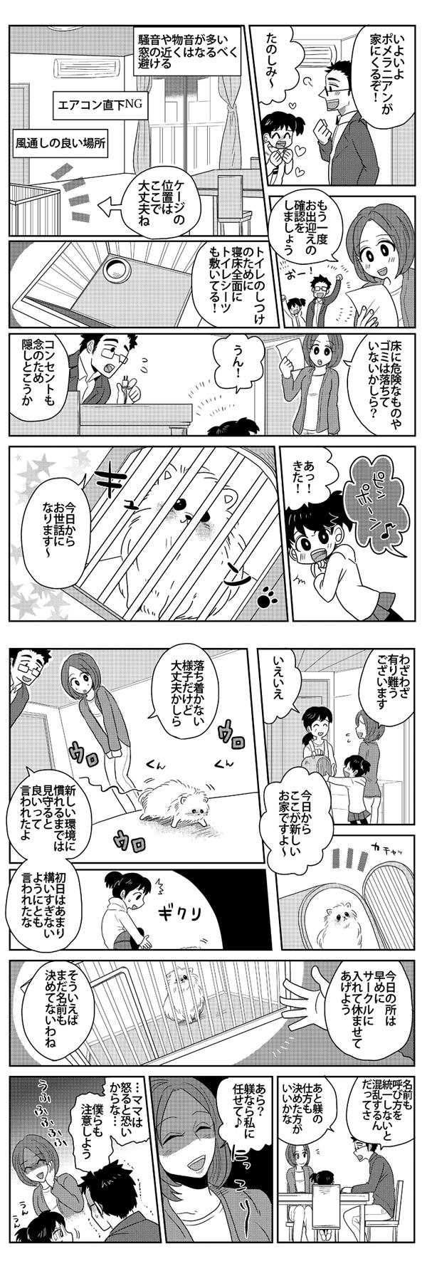ポメラニアン漫画4
