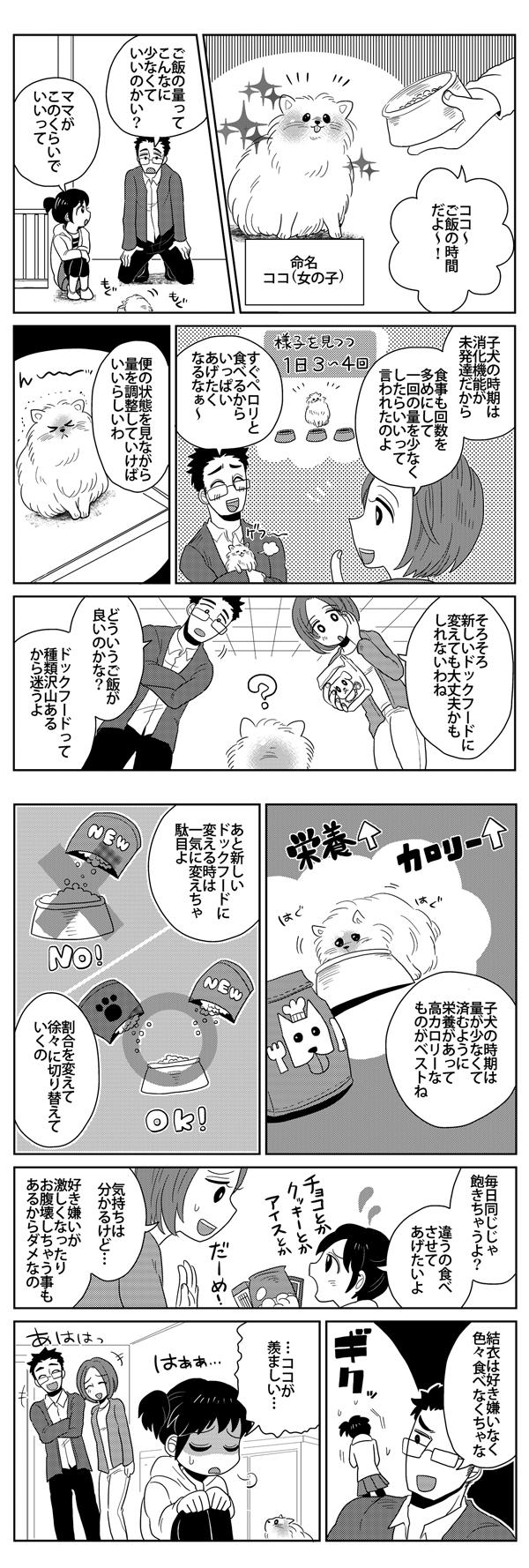 ポメラニアン漫画5