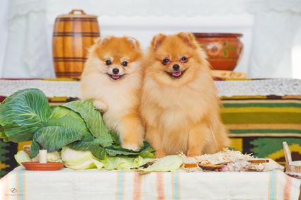 2匹目の犬を飼う