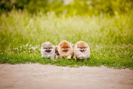 愛犬との散歩