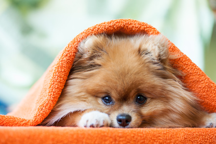 犬と腸の関係